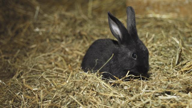Foto fieno per conigli