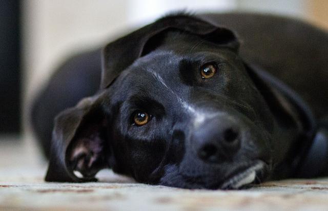 cane soffre di noia