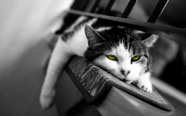 Foto Come sapere se il Gatto si annoia