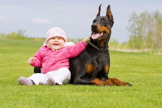 Foto Educazione del Cane