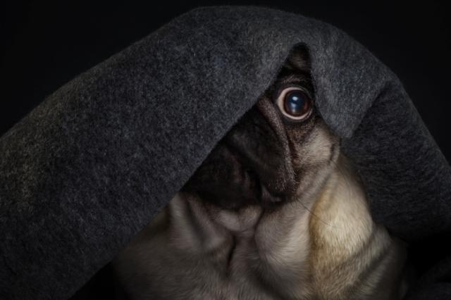 Foto Il Cane ha paura? Alcuni consigli