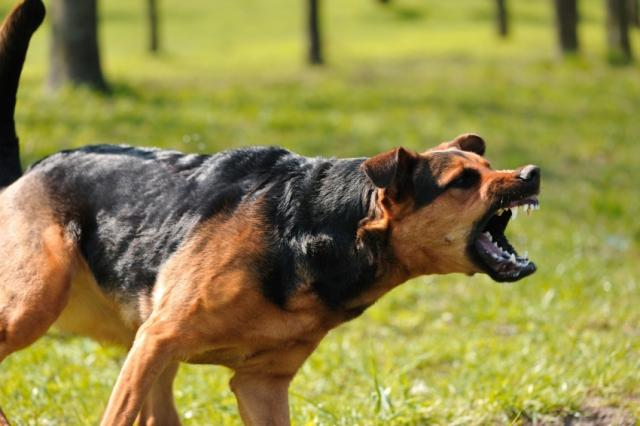 cane aggressivo perchè ha paura