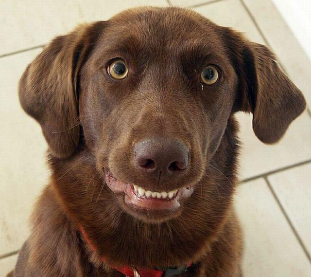 Foto Anche i cani ridono?