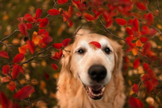 Foto Come sapere se il Cane è felice