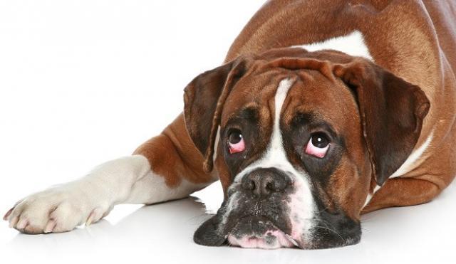 Foto Perchè il cane fa i suoi bisogni in casa?