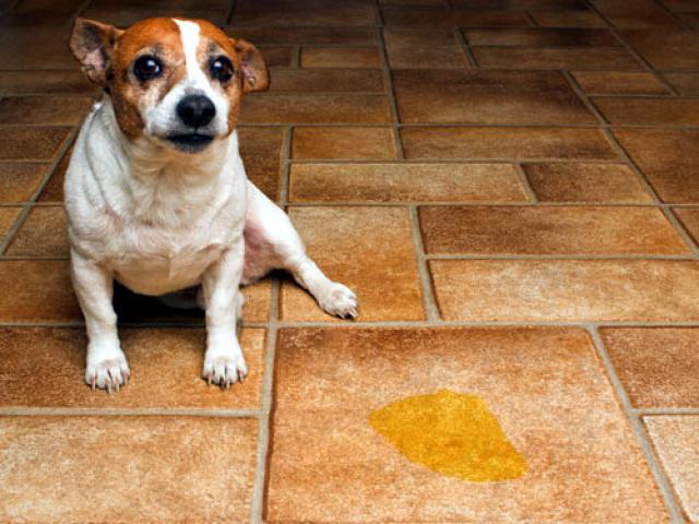 cane sporca in casa