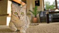 gatto sporca in casa