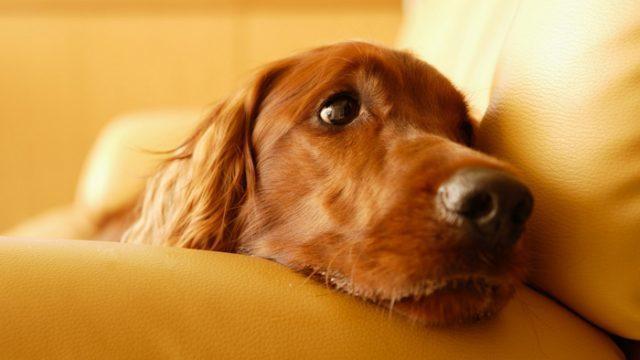 cane anziano malattie comuni