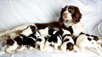 cane alla cuccioli