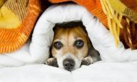 cane ipotermia