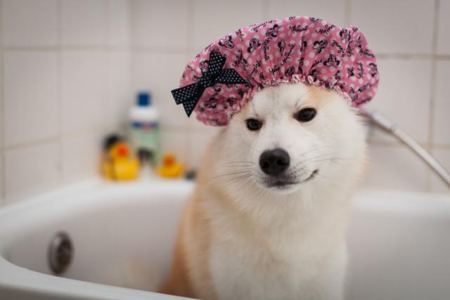 Foto Come scegliere lo shampoo per il Cane