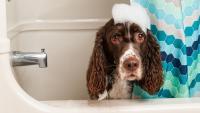 cane che fa lo shampoo