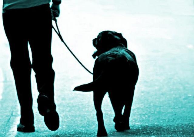 Foto Come scegliere il guinzaglio per il Cane