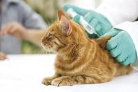 vaccinazione del gatto