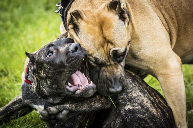 Foto Il mio Cane è stato morso: cosa fare?