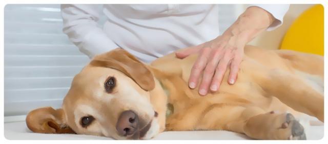 come massaggiare il cane