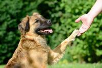 Foto Come massaggiare il Cane