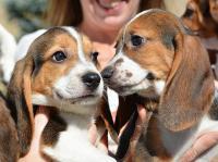 Foto Fecondazione in vitro nei Cani