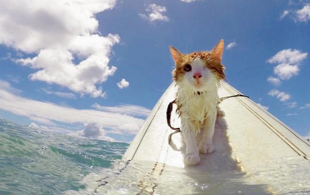 Foto gatto fa il bagno