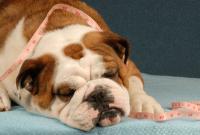 cane sterilizzato