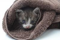 Foto Fare il bagno al Gatto, i nostri consigli