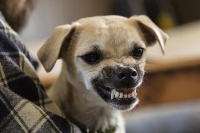 cane pauroso aggressivo
