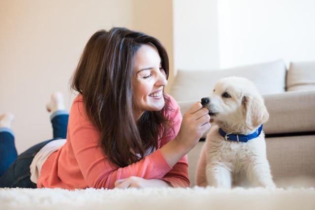 Foto Singhiozzo nel cane: cause e trattamento