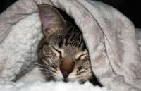 gatto infreddolito