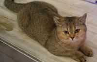 Foto Aborto nel gatto: cause e sintomi