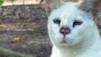 tumore naso gatto