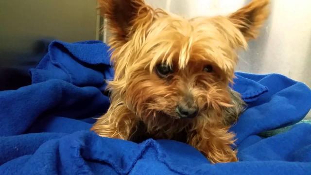 Foto Alizin (aglepristone) - Farmaci per Cani