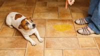 cane urina in casa