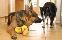 Foto Il mio Cane è possessivo?