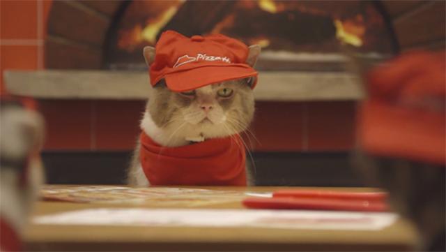 gatto mangia la pizza