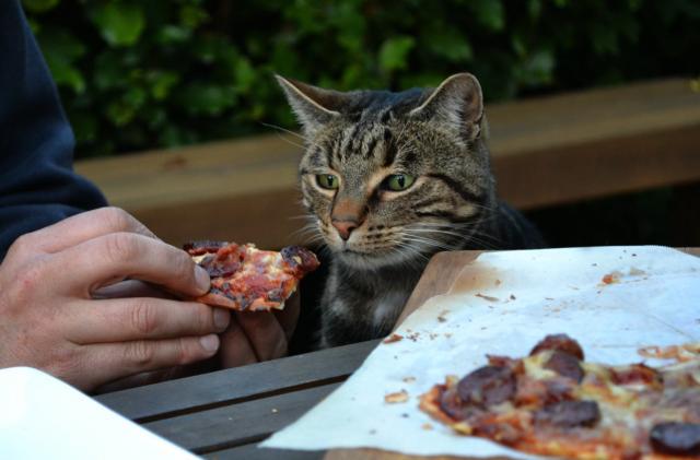 Foto Il Gatto può mangiare pizza?