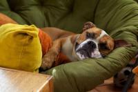 Foto Fermenti lattici per Cani