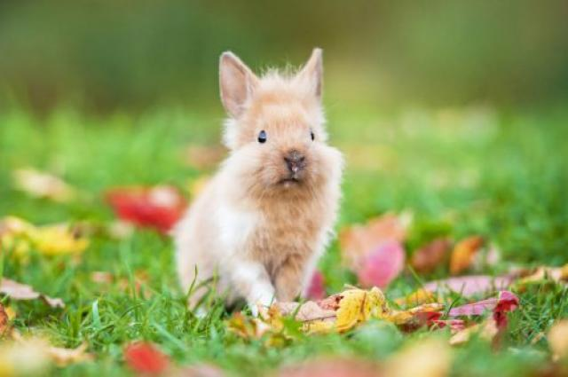 Foto alimentazione coniglio nano