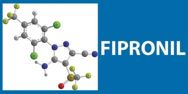 Foto Fipronil e Cifenotrin (Parastar Plus, Fiproguard Max) - Farmaci per Cani