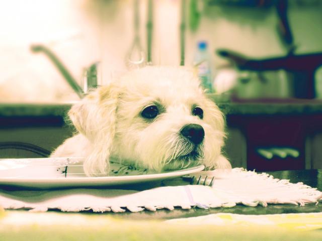 Foto Perchè il Cane ha sempre fame?