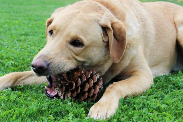 cane mangia tutto