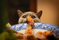 Foto Perchè il mio Gatto ha sempre fame?