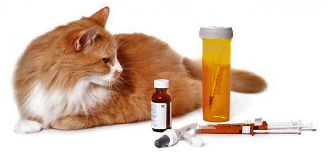 insulina gatto diabetico