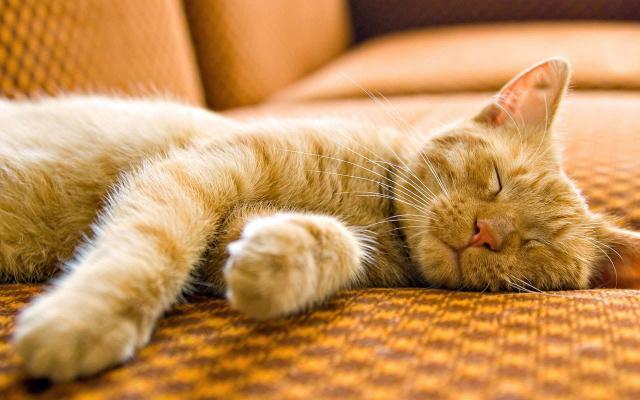 gatto sogna