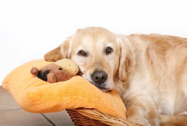 cane accoppiamento