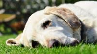 Foto A che età il Cane va in calore per la prima volta?