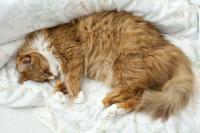 Foto Quanto dormono i Gatti?