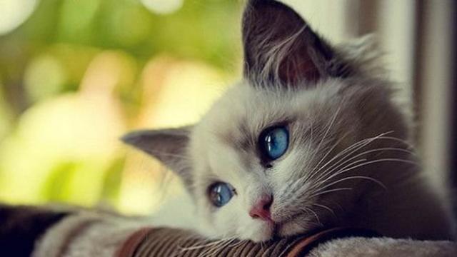 gatto soffre di ansia