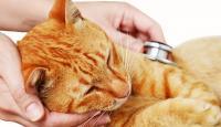 gatto e stress