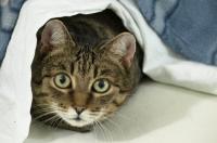 Foto Come calmare un Gatto spaventato