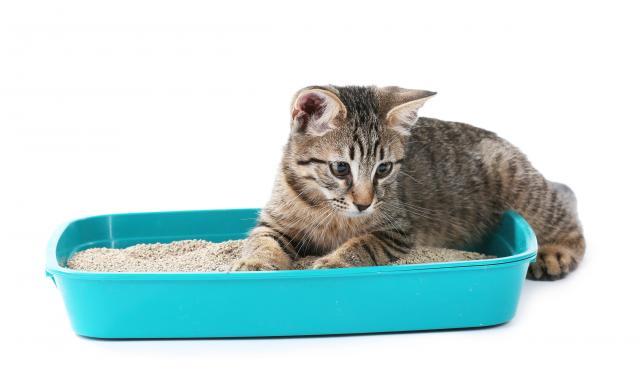 Foto Perche' il gatto non usa la lettiera?